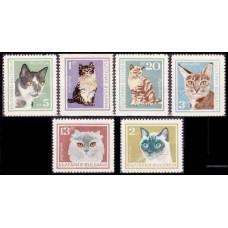 1967 Bulgaria Mi.1717-1722 Cats 7,00 €